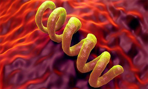 Возбудитель сифилиса