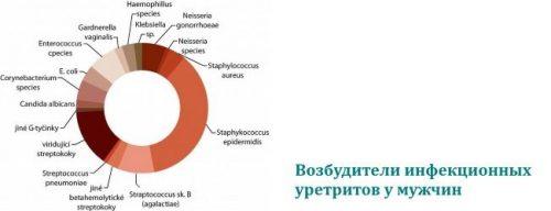 Возбудители инфекционных уретритов