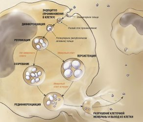 Жизнедеятельность бактерий