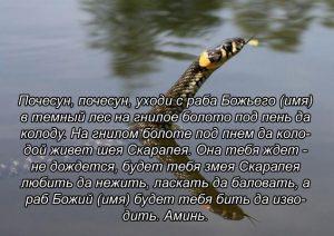 Заговор на змею