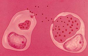 Заражение клетки