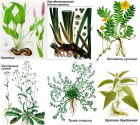 Сбор от эндометриоза
