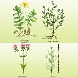 Сбор трав при аднексите