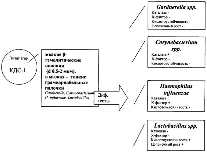 Способ лабораторной диагностики гарднереллеза
