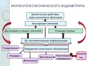 Морфогенез хронического эндометрита