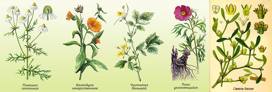 Растения для спринцевания