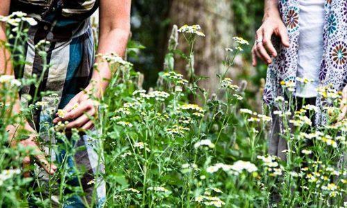 Травы для лечения миомы матки 1