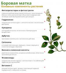 Состав растения