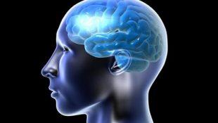 Улучшает мозговую деятельность