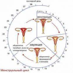 Наблюдение за менструальным циклом