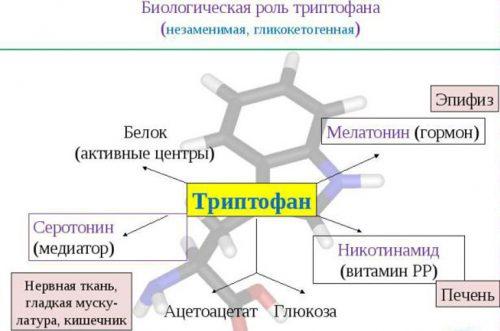 Биологическая роль препарата Триптофан