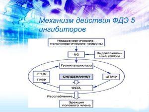 Механизм действия ФДЭ-5
