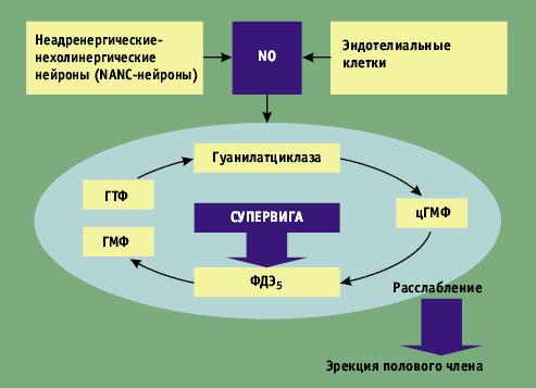 Схема действия препарата Супервига