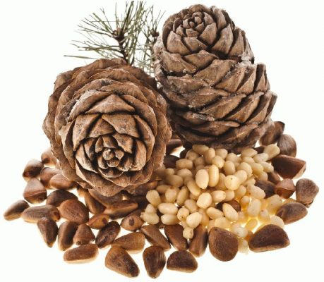 Употребление кедровых орехов для мужской потенции