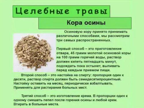 Целебные рецепты с осиновой корой