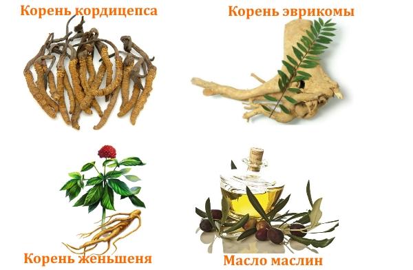 Состав препарата Ярсагумба