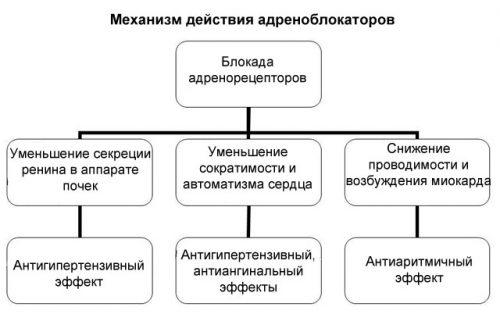 Механизм действия адреноблокаторов