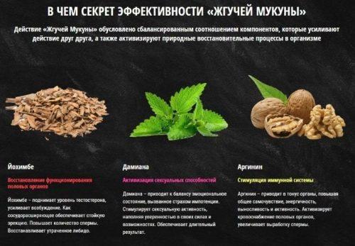 Состав средства Жгучая Мукуна