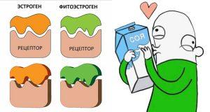Фитоэстроген в соевом протеине
