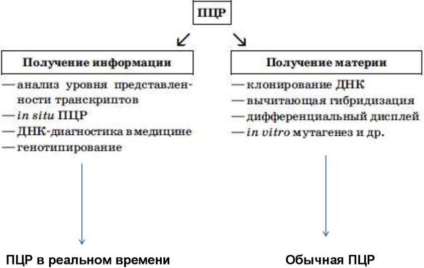 Классификация ПЦР