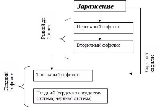 Схема развития сифилиса